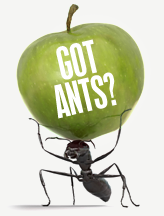 Ants in the house?